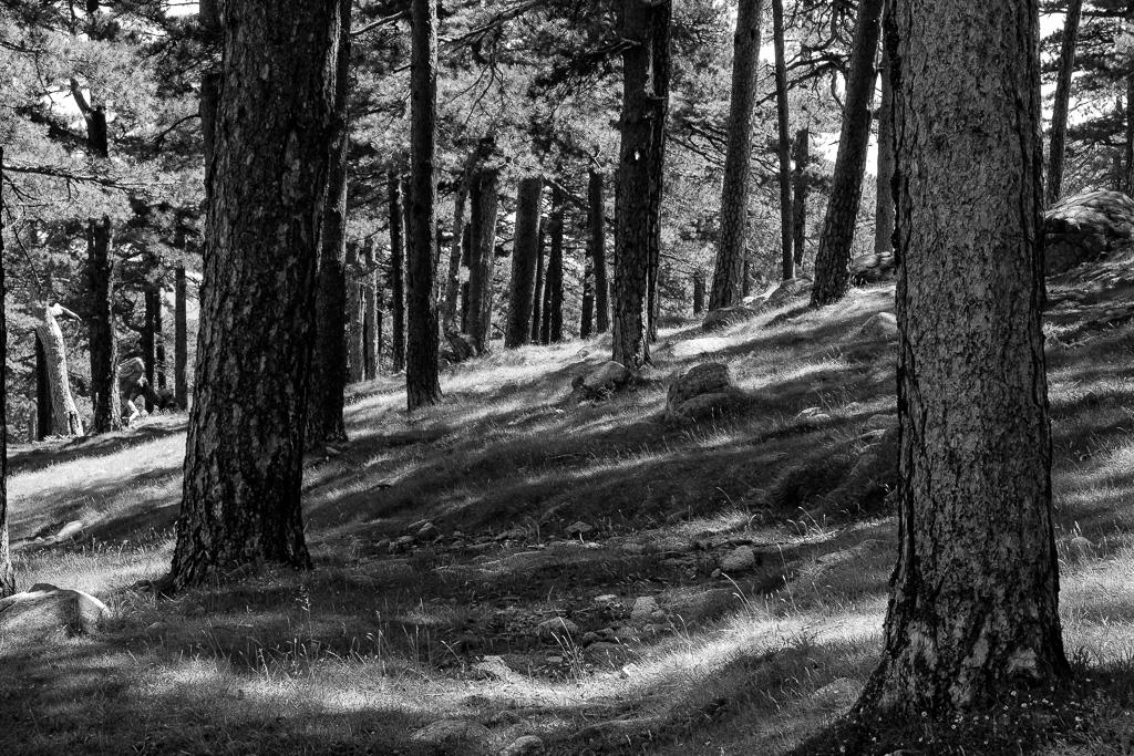 Wald, Bavella