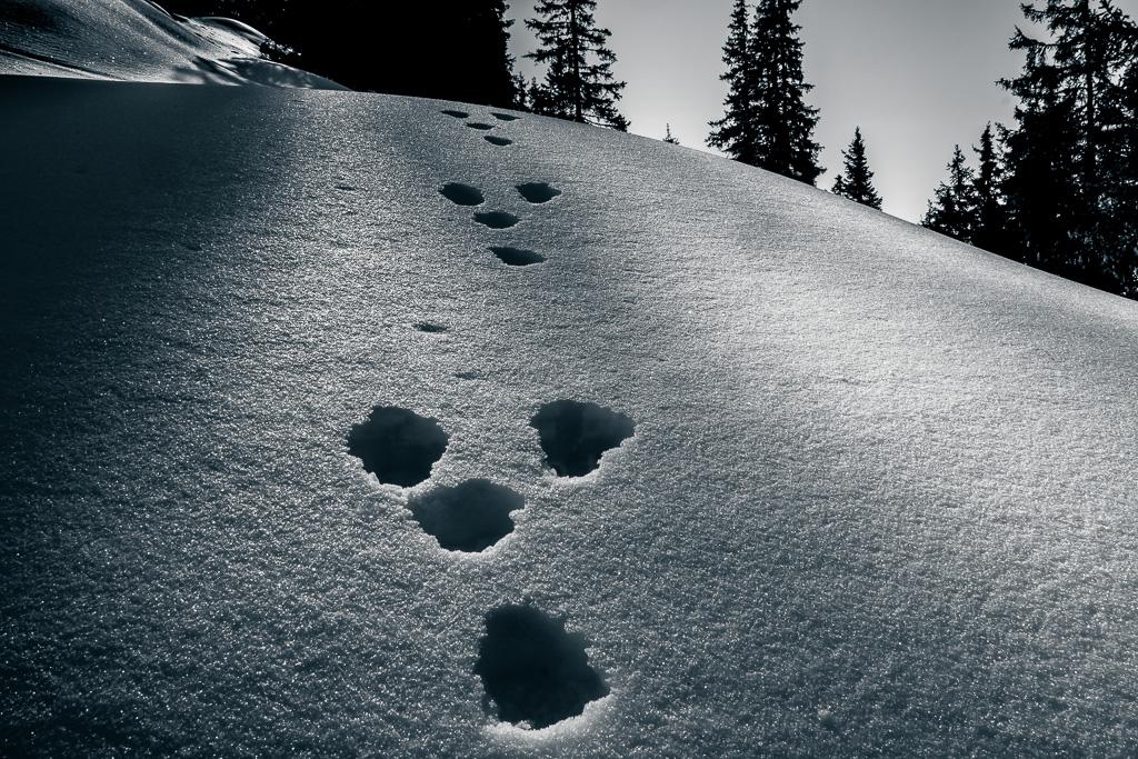 Spuren im Schnee #7