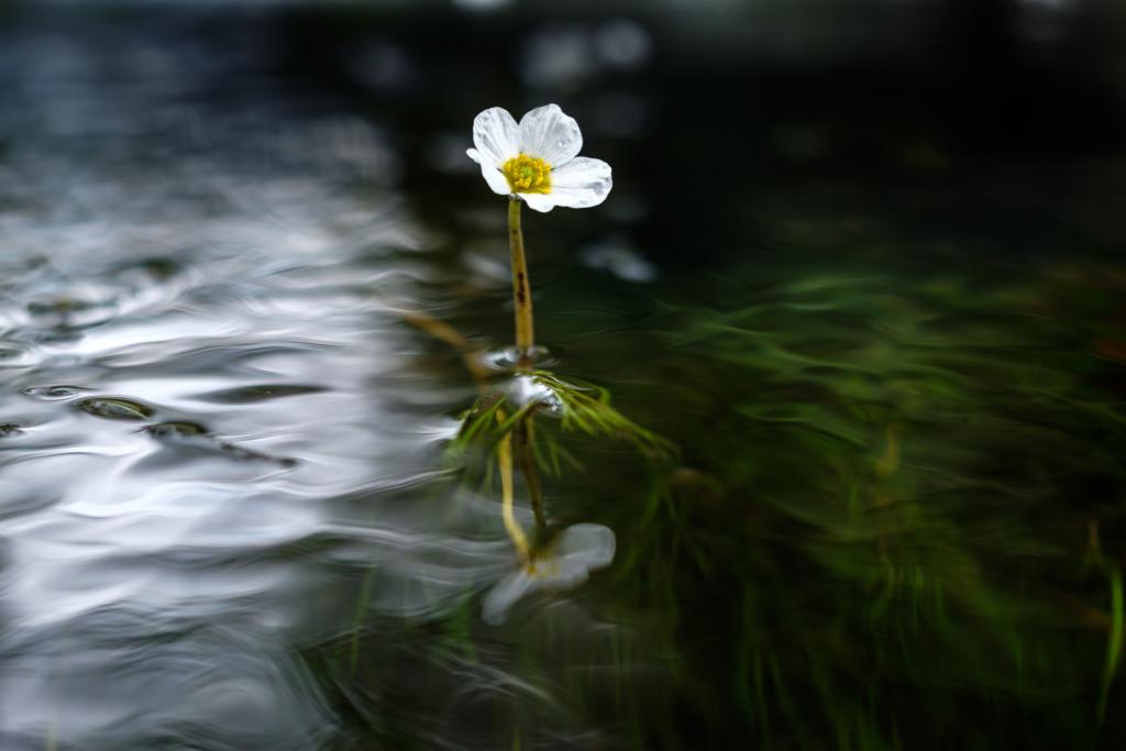 Landschaftsfotografie Würm - sehnerv, Christoph Ramm